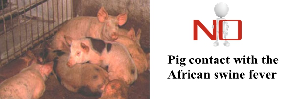 How to prevent African swine fever