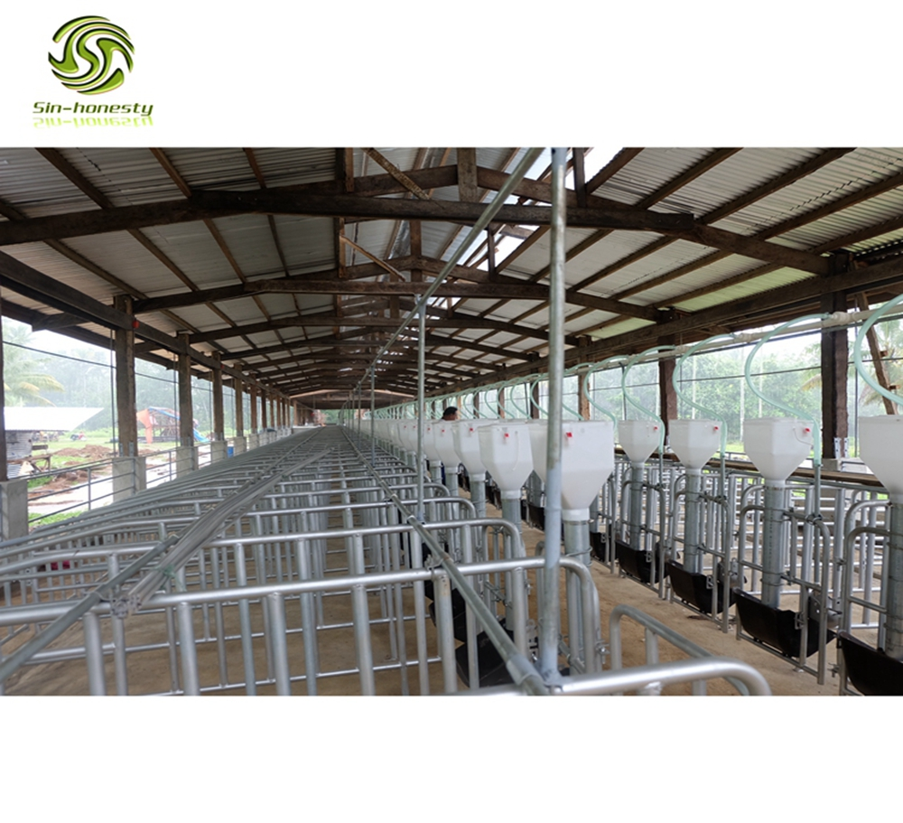 pig farm equipment sows gestation crate sow stalls SH003