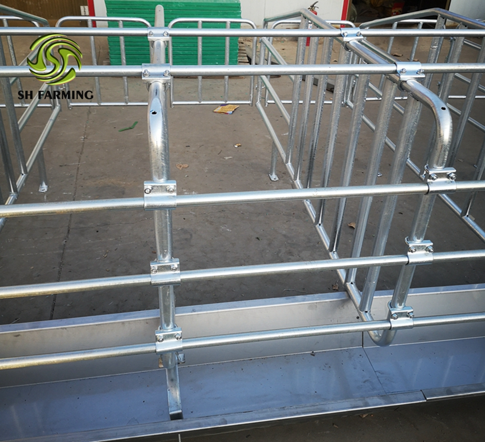 pig farm equipment sows gestation crate sow stalls SH004